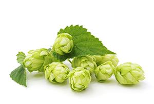 https://www.muellerbraeu.com/wp-content/uploads/muellerbraeu_bier-hopfen.jpg